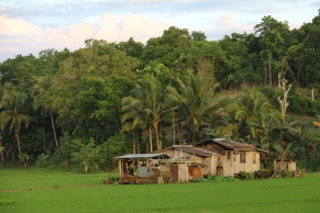 Bohol rice fields