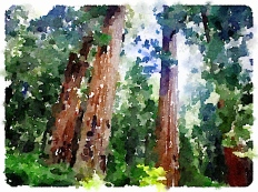 Sequoia National Park,